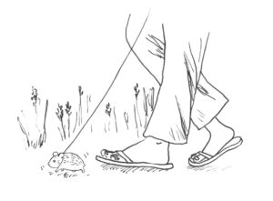 Hamster walk